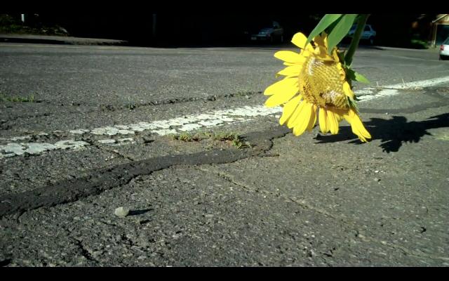 MCSunflower (WITFCL)